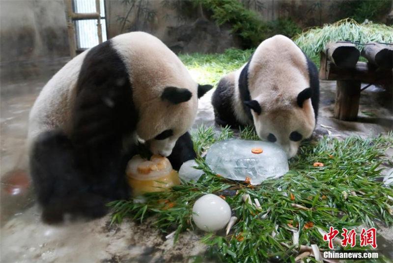 パンダの兄弟が杭州で誕生日パーティ