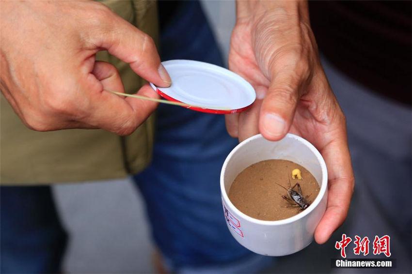 コオロギ市で今年の初売り開始、最高価格数千元のコオロギも 杭州市