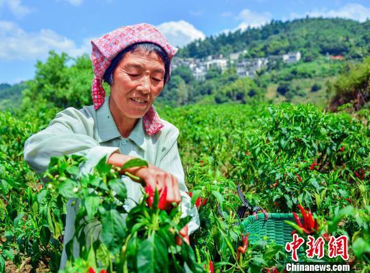 「中国で最も美しい村」、秋の収穫期を迎える 江西省