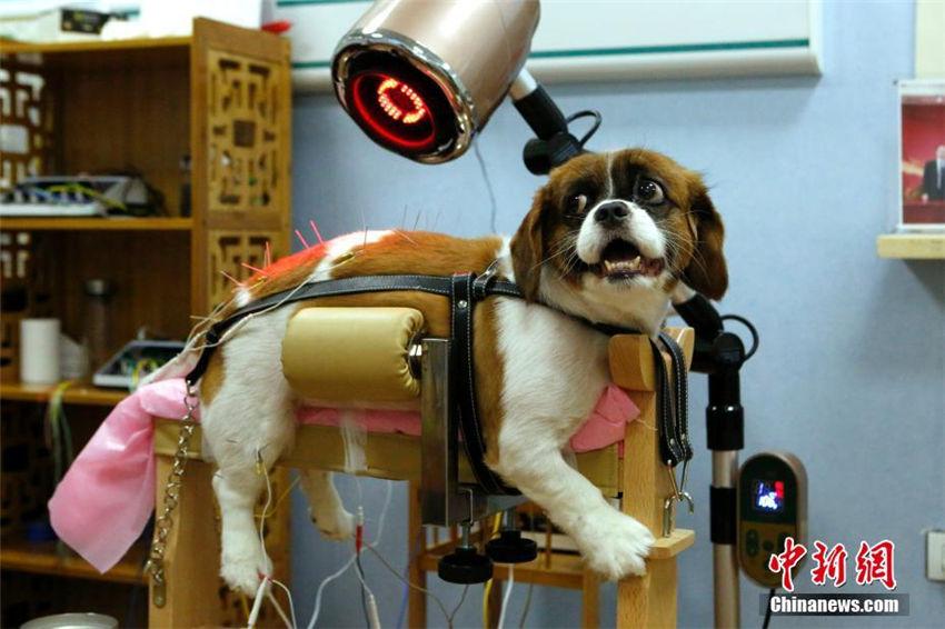 動物病院がペット向け中医治療サービス導入へ 北京市