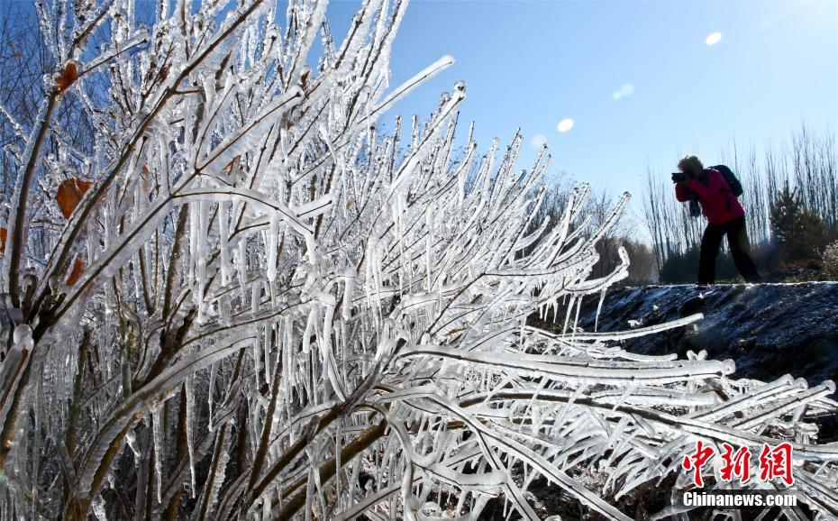 寒波到来で「水晶の衣」まとい、きらめく木々 甘粛省