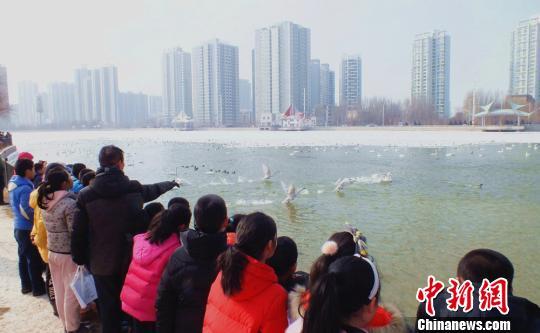 雪どけに合わせ杜鵑河が渡り鳥たちのオアシスに 新疆