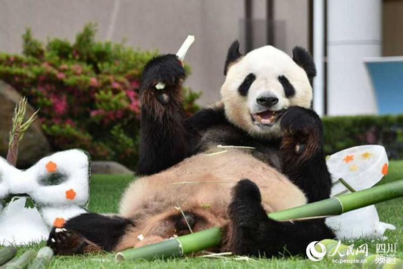 成都から日本へやって来たパンダの「永明」、日本動物大賞グランプリに