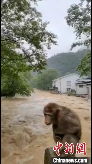 豪雨で観光地の武夷山が閉鎖 橋の上に避難するサルがネットで話題に